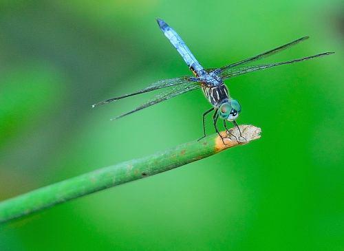 Dragonfly, Ijams Nature Center