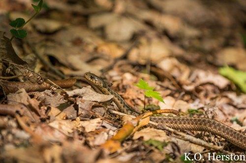 baby snake