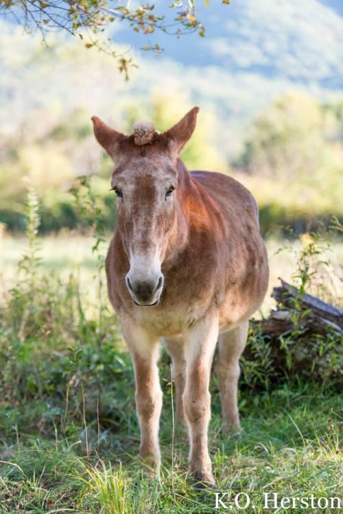mohawk donkey