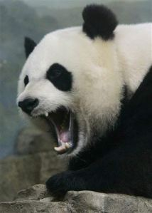 panda mad